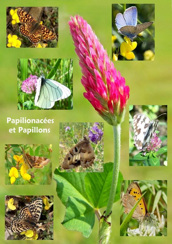 Papillons jardin - Plantes pour papillons ...