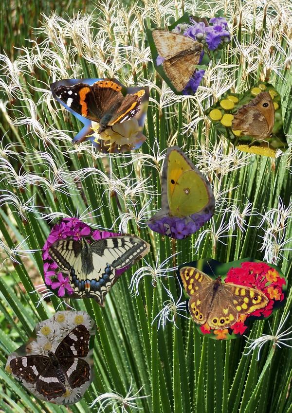 Papillons jardin for Fleurs et arbustes de jardin